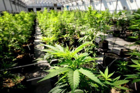 "Ohio lawsuit challenges ""racial quota"" in marijuana program"
