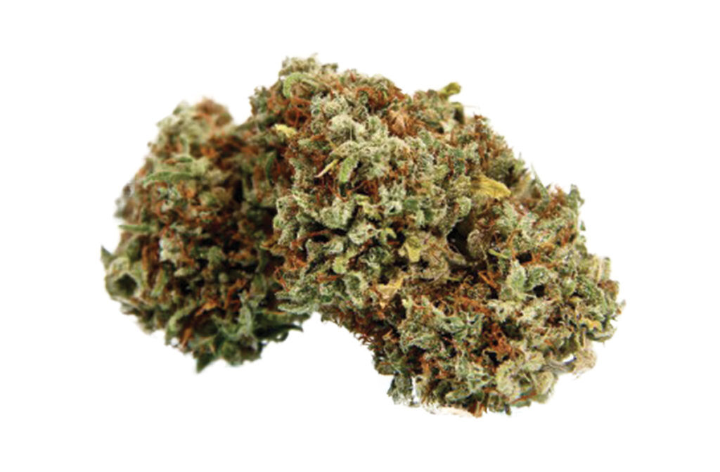 Malawi Gold Marijuana Strain Review