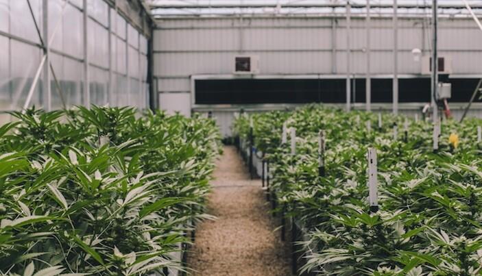 Michigan Poll Shows 61 Percent Want Marijuana Legalization
