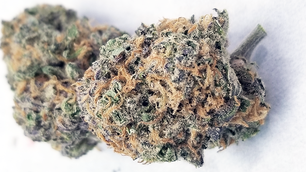 Bay Dream – Strain review