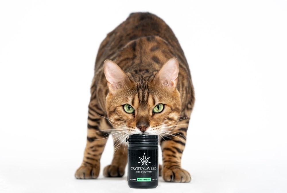 Does CBD Get Cat High?